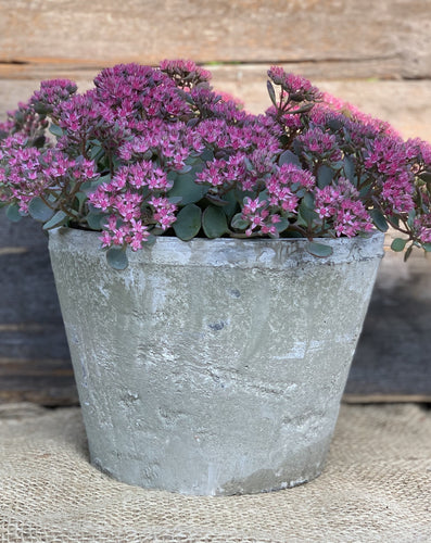 Antiqued Whitestone Plant Pot - Abigailshome