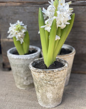 Load image into Gallery viewer, Antiqued Whitestone Plant Pot - Abigailshome