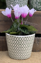 Load image into Gallery viewer, Faux Cyclamen Plant - Abigailshome