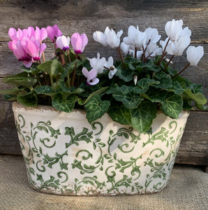 Green Ceramic Planter - Oval - Abigailshome