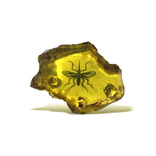 Load image into Gallery viewer, Jurassic Amber 3D Poly Pin
