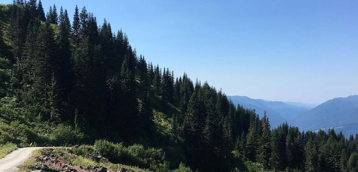 Landscape of mountainside with several pine trees in pacific northwest