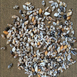 100pc Mini Natural conch shells (0.9-1.5cm)
