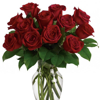 Doz red Roses in a Vase