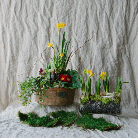 Spring Living Arrangement