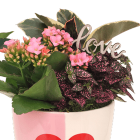 GIVOPOLY Floral Bicolor Ceramic Heart Planter