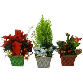 Floral - The Three Little Elves Plant