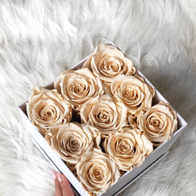 Real Roses That Last 2-3 Years! Champagne Roses