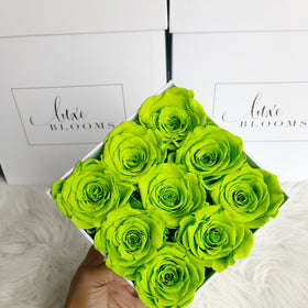 Real Roses That Last 2-3 Years! Green Apple