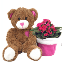GIVOPOLY Floral Teddy Bear and a Kalanchoe Plant