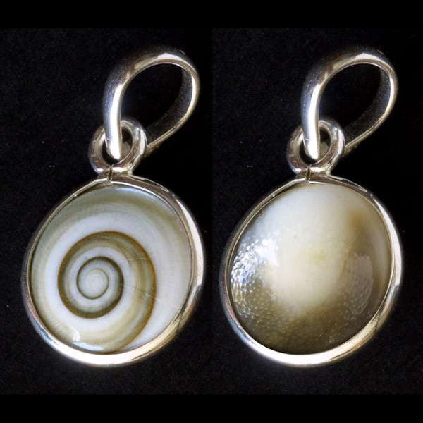 Shiva Eye Shell Pendant - Tribu
