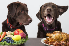 Are Proteins Good for Dogs?