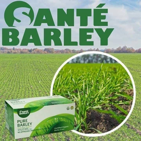 *Best Seller!* Sante Pure Barley Organic Grass Powdered Drink