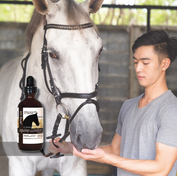 Im-bue EQUINE-COMFORT CBD 2000MG for horse