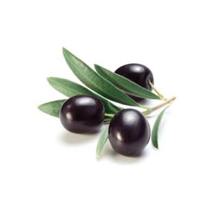 Black Olives from Greece | Parnon Estates