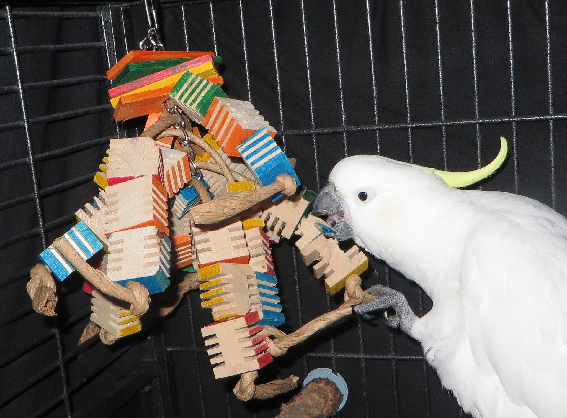 Chipper Parrots - Bird Toys and Supplies - Caring for Pet