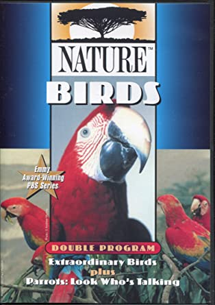 Nature Birds - Look who is Talking