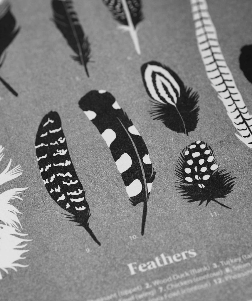 Feathers - The Collective Press