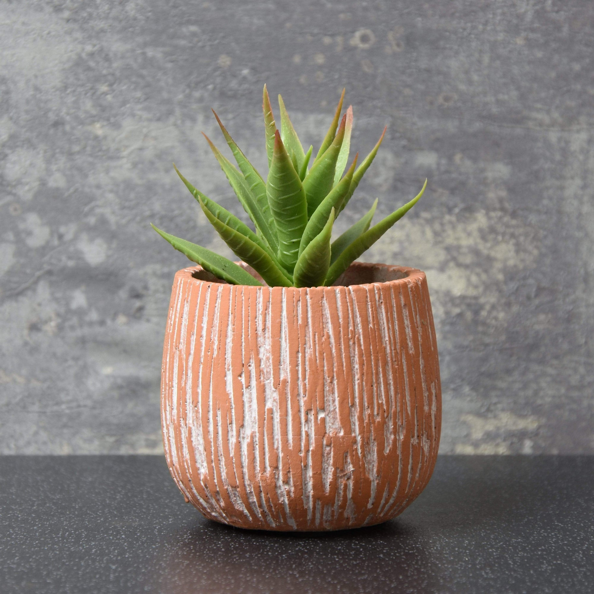 Aloe Vera Succulent in Textured Cement Pot Red 13cm 6PK