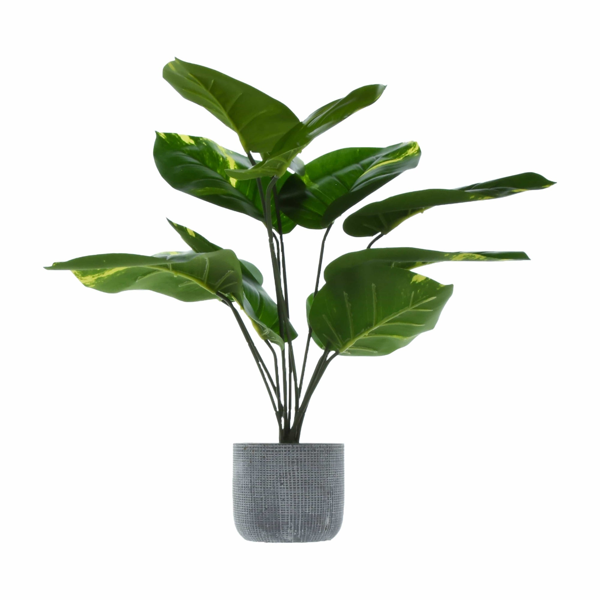 Large Tropical Plant Green in Round Cement Pot 57cm 1PK