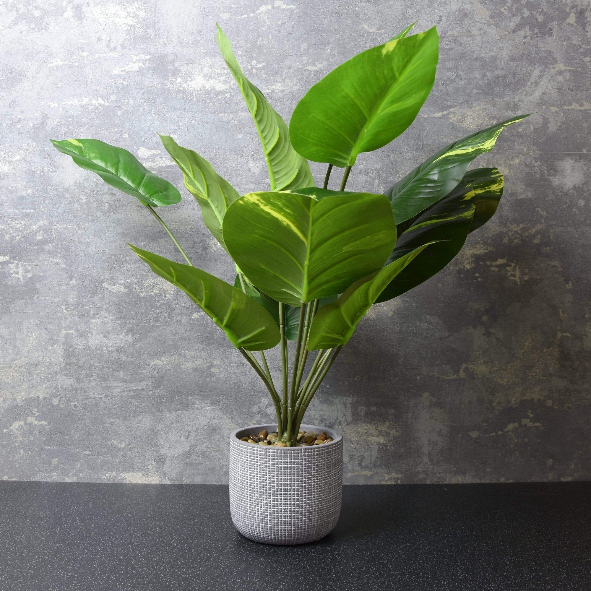 Large Tropical Plant in Round Cement Pot Green 57cm 1PK