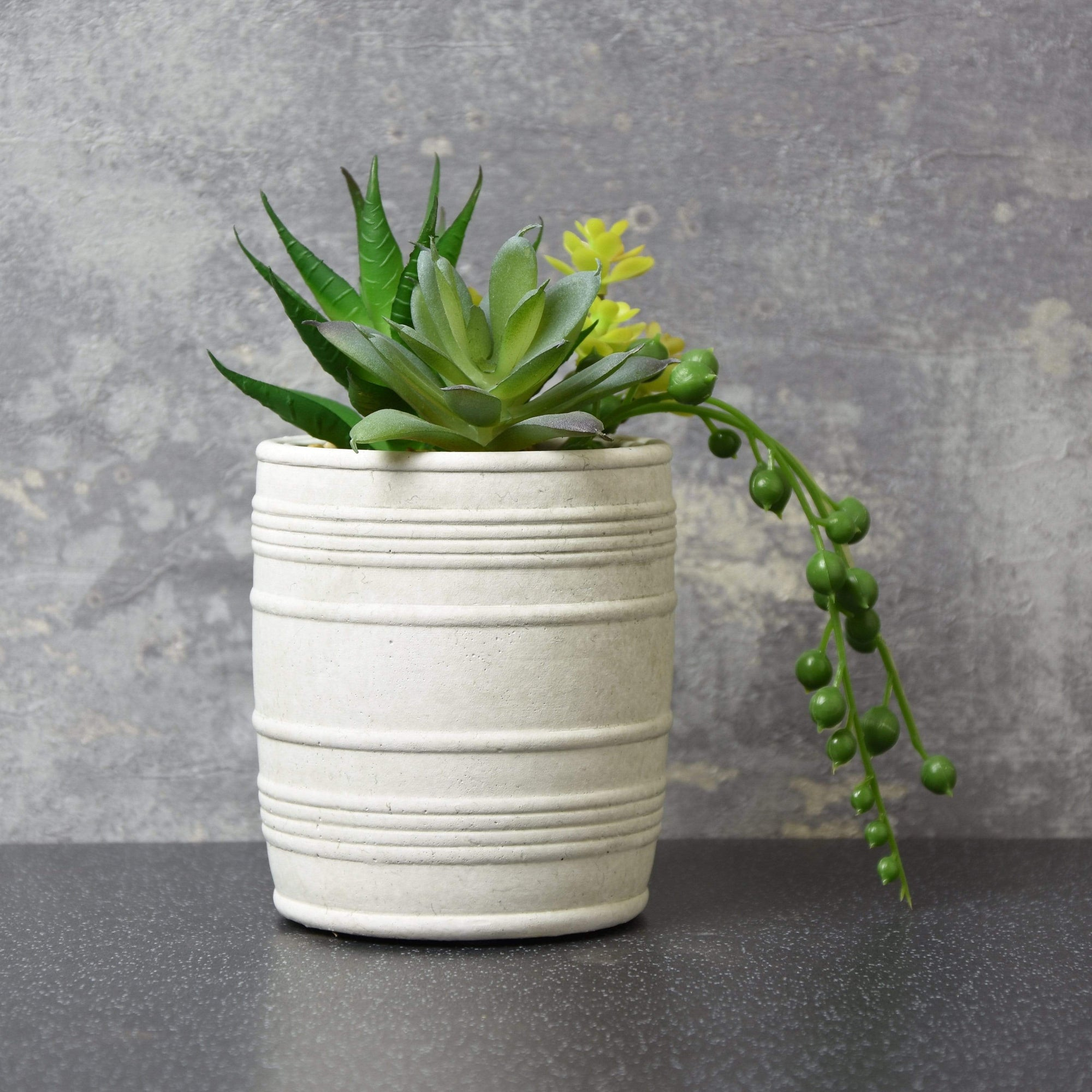 Mixed Succulents Green in Textured Cement Pot 15cm 6PK