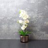 Candlelight Home Artificial Plants & Flowers The Flower Patch Cream Orchid in Glass Pot 28cm 6PK