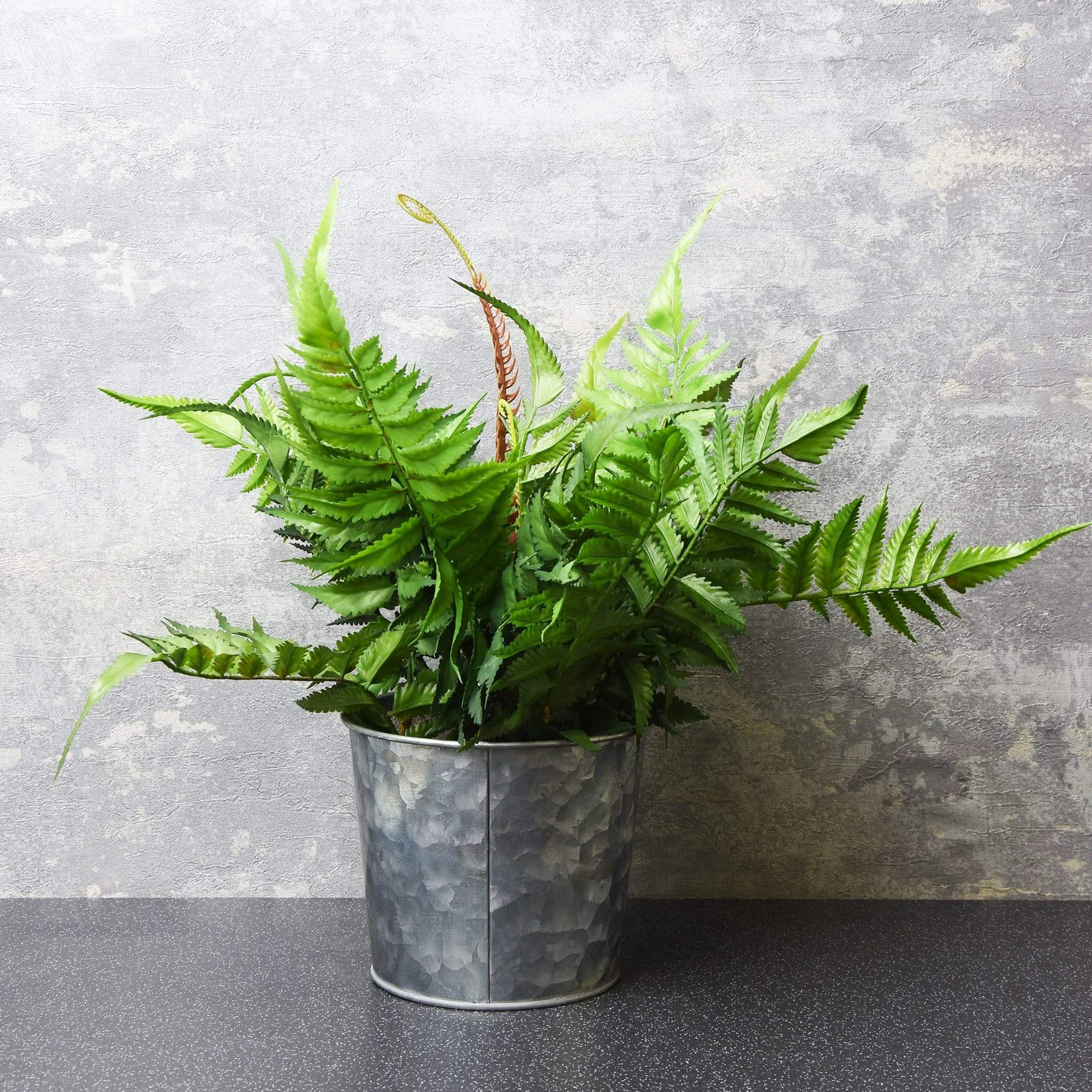 Candlelight Home Artificial Plants & Flowers The Flower Patch Fern in Pot Grey 29cm 4PK
