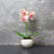 Candlelight Home Artificial Plants & Flowers The Flower Patch Orchid Cream & Pink in Ceramic Pot 26cm 6PK