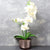 Candlelight Home Artificial Plants & Flowers The Flower Patch Orchid in Glass Pot Cream 40cm 4PK