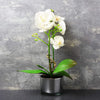 Candlelight Home Artificial Plants & Flowers The Flower Patch Orchid in Glass Pot White 26cm 6PK