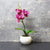 Candlelight Home Artificial Plants & Flowers The Flower Patch Orchid Purple in Ceramic Pot 26cm 6PK