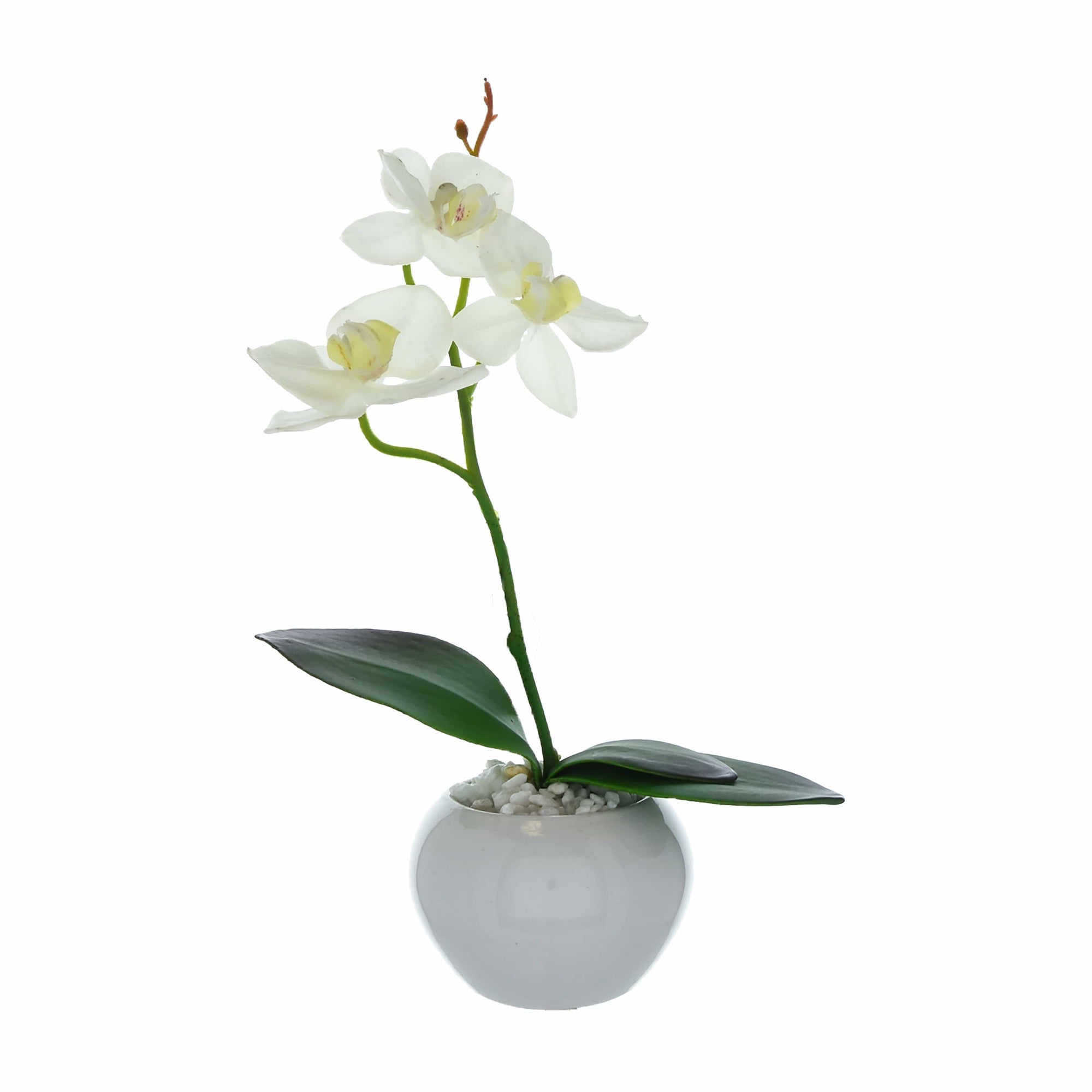 The Flower Patch Orchid White in Ceramic Pot 26cm 6PK