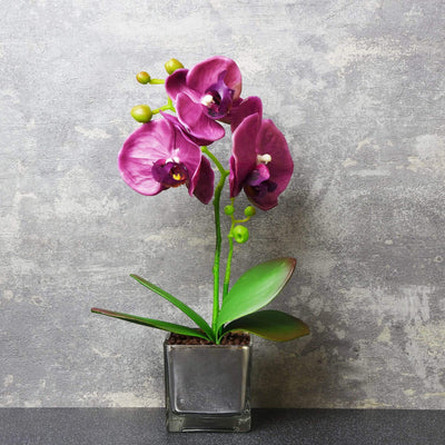 Candlelight Home Artificial Plants & Flowers The Flower Patch Purple Orchid in Glass Pot 34cm 6PK