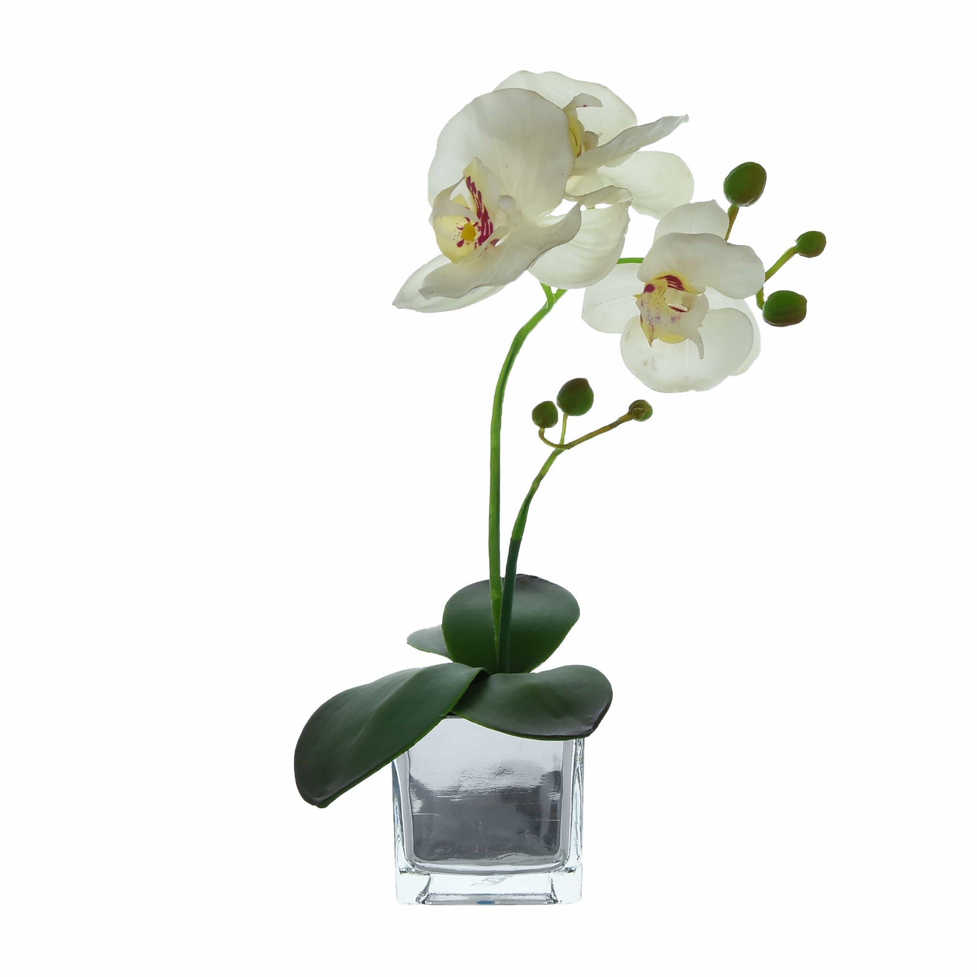 Candlelight Home Artificial Plants & Flowers The Flower Patch White Orchid in Glass Pot 34cm 6PK