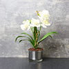 Candlelight Home Artificial Plants & Flowers The Flower Patch White Orchid in Glass Pot 40cm 4PK