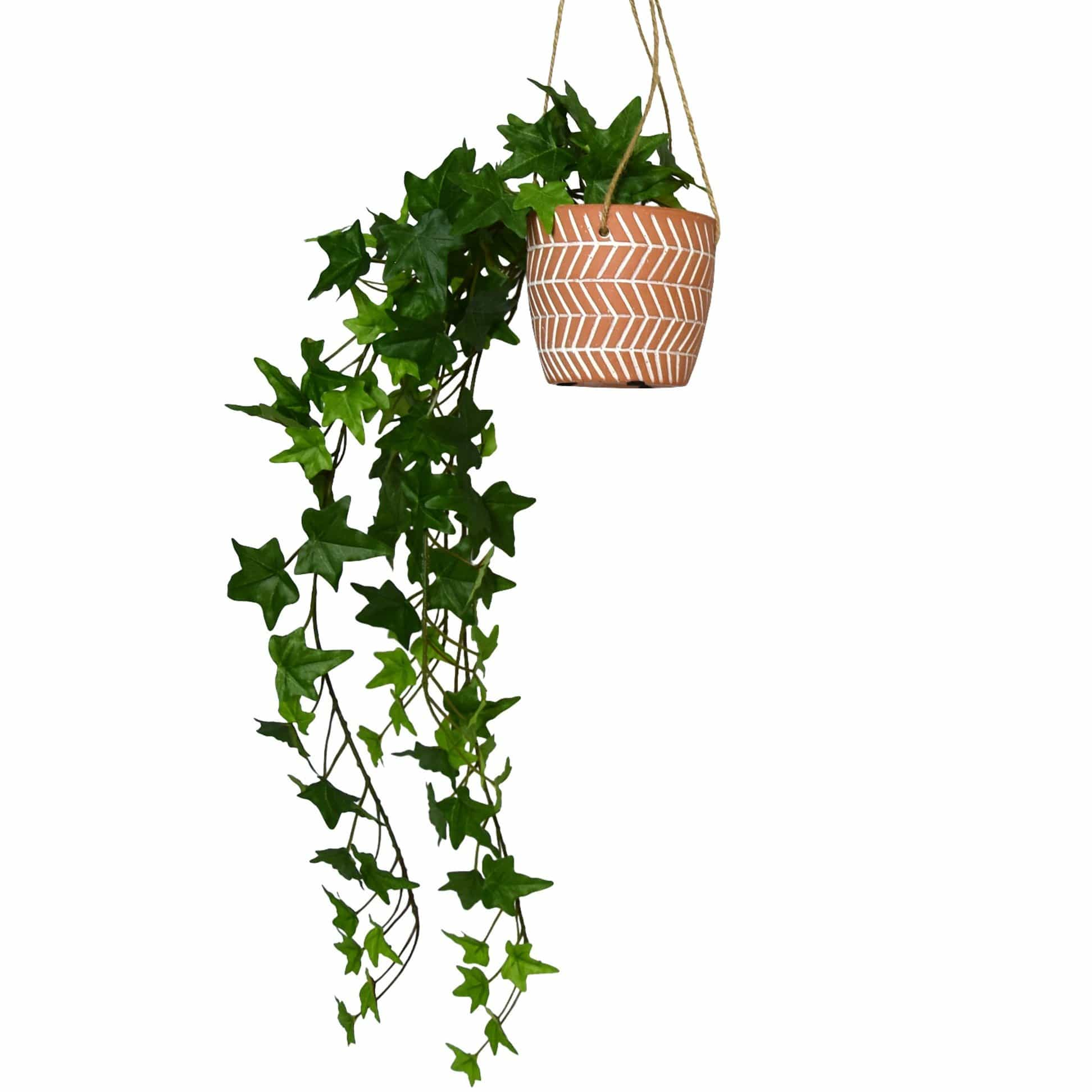Faux Trailing Ivy in Hanging Ceramic Pot in Gift Box 1PK