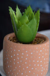 ESME Homeware Artificial Plants Spikey Succulent in Spotty Cement Pot Red