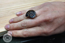 Load image into Gallery viewer, Ammonite Fossil Sterling Silver/ Argentium Ring