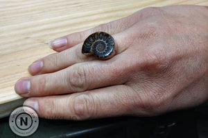 Ammonite Fossil Sterling Silver/ Argentium Ring