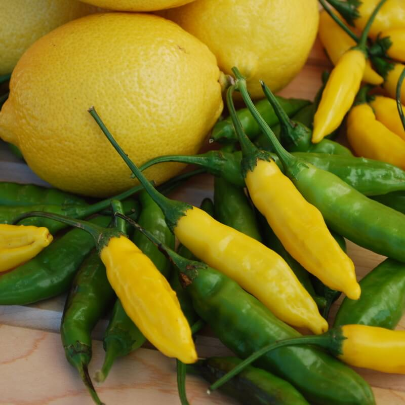 Chili 'Lemon Drop'