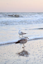 Seagulls playing in the waves print