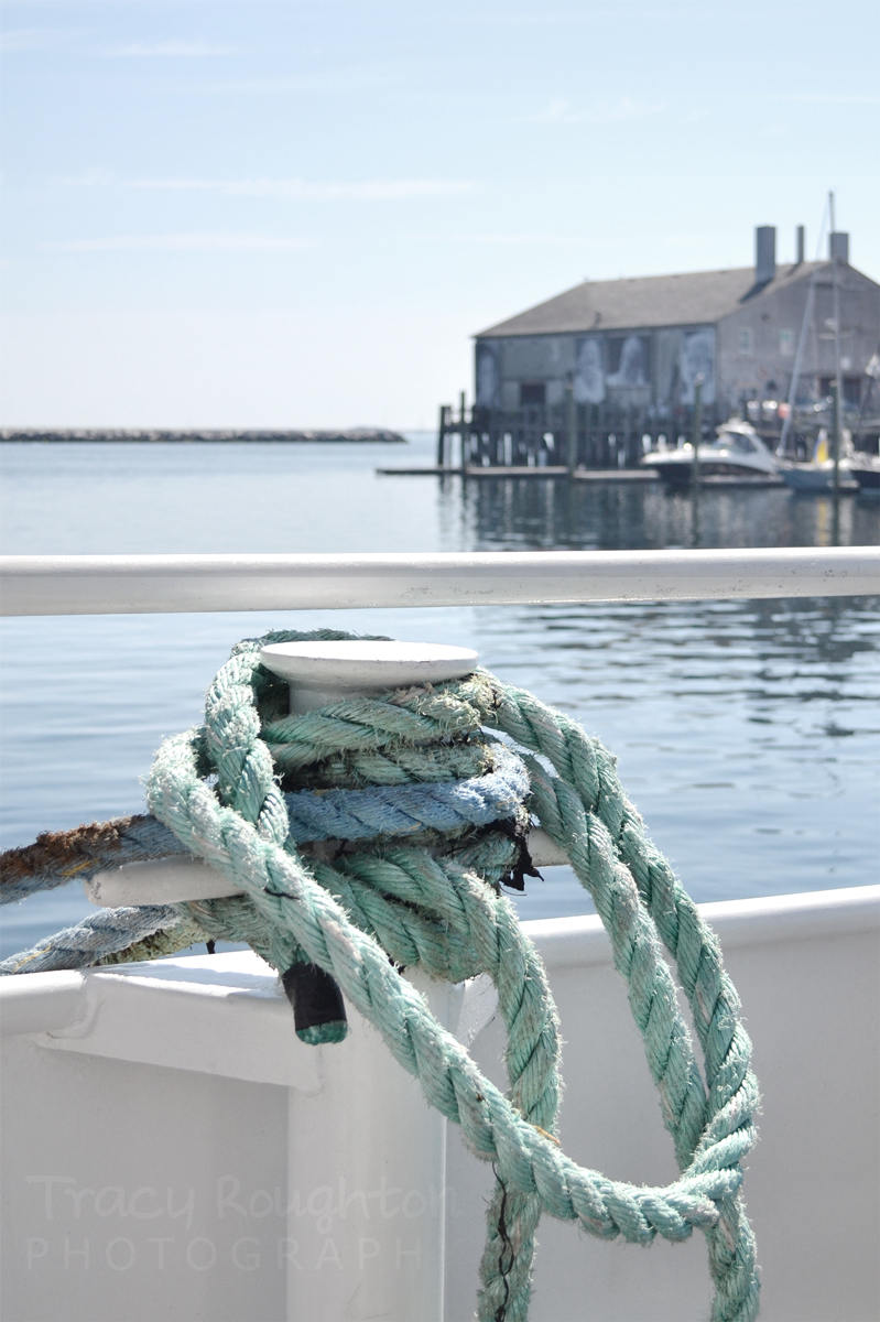 Cape Cod green knotted rope print