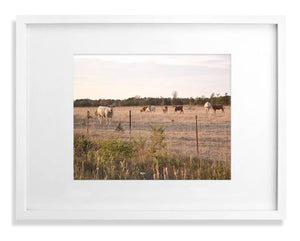 Sunset over field of cows print