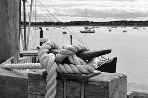 Cape Cod blue knotted rope in harbor black and white print