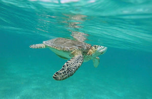 Tulum + Swimming with Turtles