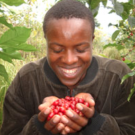 DUKUNDE KAWA - Gakenke, Rwanda - Fair Trade - Shade Grown