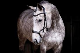 PS of Sweden - Pioneer Bridle