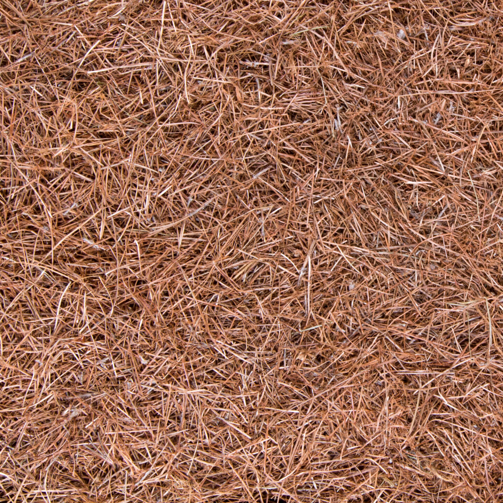 Crushed Pine Needle Mulch