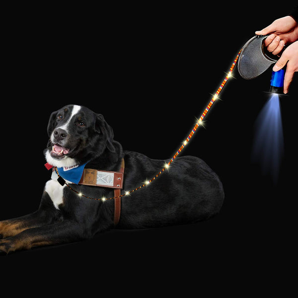 USB Dog Leash - Vecelo furniture